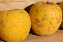 Pomme Caisse 14kg Gold Rush