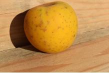 Pommes Vrac Gold Rush