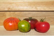 Tomate variétés anciennes VERNOU